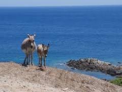 Parco Nazionale Asinara - settembre 2021